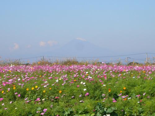 富士山も綺麗に望めます