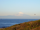 富士山の裾まで白くなってきましたよ〜